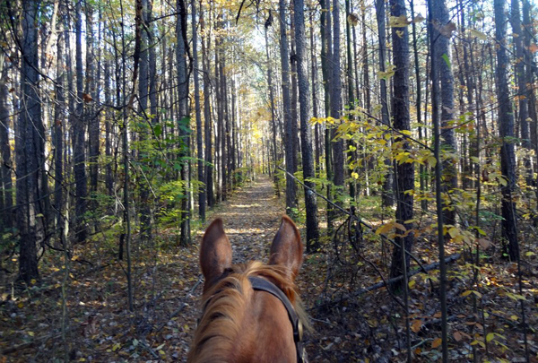 deam-wilderness-horseback-riding-indiana
