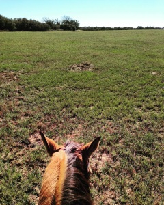 A new view between the ears as Dunnie and I head out to the trails at 7IL Ranch.