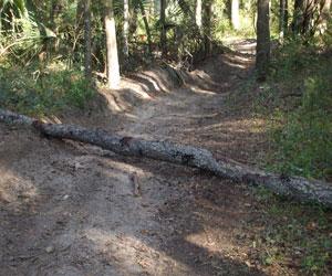 treecrossing