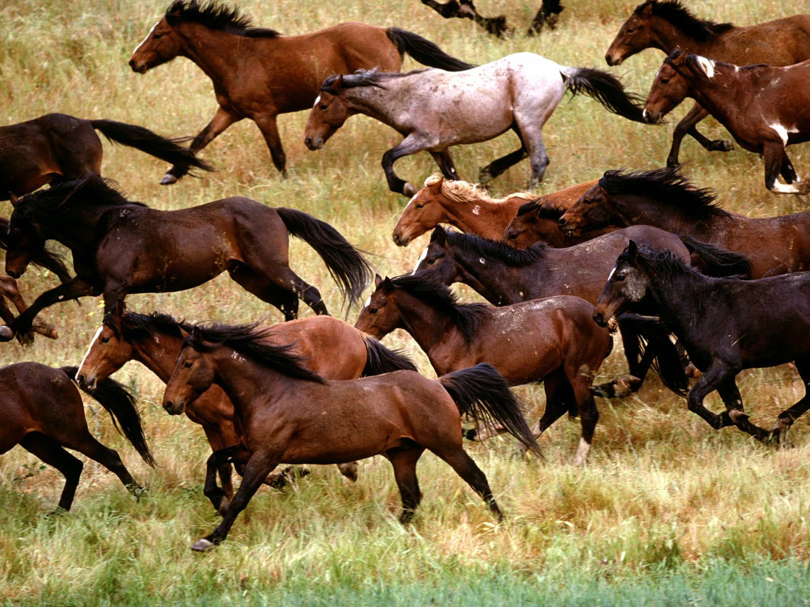 Wild Horses Native Or Invasive Species Urban Equestrian